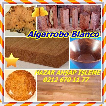 cats Algarrobo Blanco322