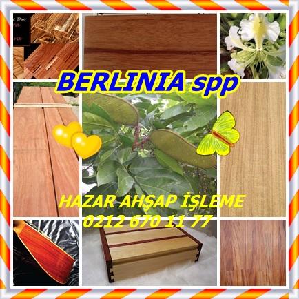cats BERLINIA spp