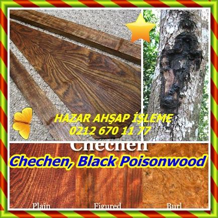 cats Black Poisonwood45654