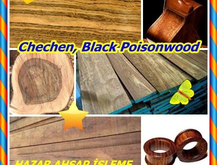 Chechen,Chechem, Black Poisonwood, (Metopium brownei),Caribbean Rosewood,Cedro Prieto, Guao Chachin, Chechem, Chechem negro