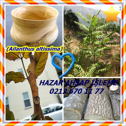 cats(Ailanthus altissima)54
