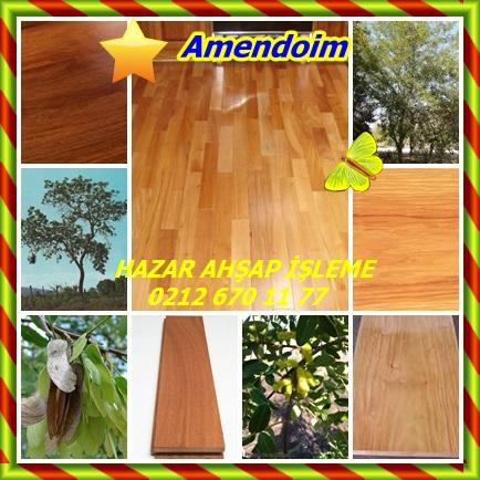 catsAmendoim443