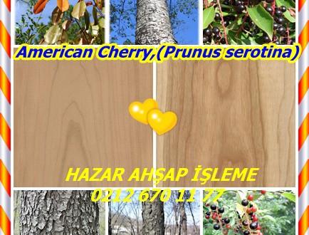 Black Cherry, Cherry, American Cherry,(Prunus serotina),Kiraz Kereste,Yabani Kiraz, Rum Kiraz, ya da dağ Siyah Kiraz