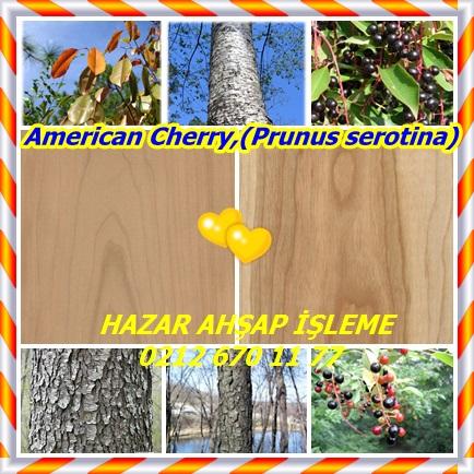 catsAmerican Cherry,(Prunus serotina)2