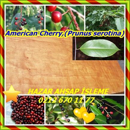 catsAmerican Cherry,(Prunus serotina)3