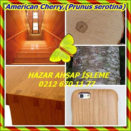 catsAmerican Cherry,(Prunus serotina)44