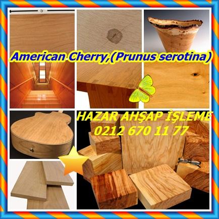catsAmerican Cherry,(Prunus serotina)77