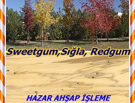 Sweetgum,Sığla, Redgum, sapgum,(Liquidambar styraciflua),Amerikan storax , bilsted , kırmızı sakız , saten-ceviz