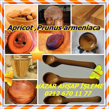 catsApricot ,Prunus armeniaca 14