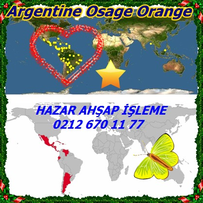 catsArgentine Osage Orange12