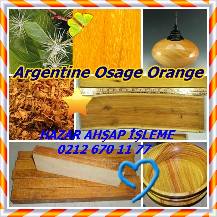 catsArgentine Osage Orange145