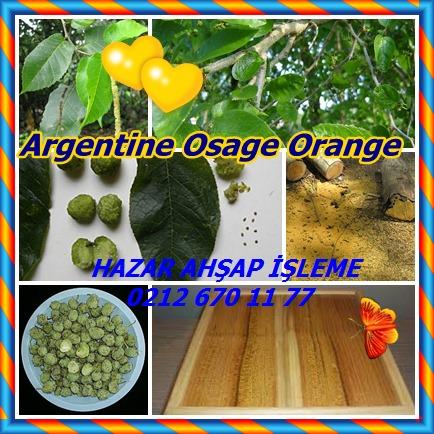 catsArgentine Osage Orange242727