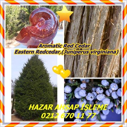 catsAromatic Red Cedar, Eastern Redcedar,(Juniperus virginiana)1
