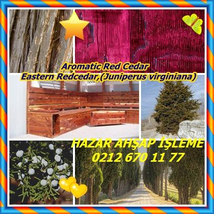 catsAromatic Red Cedar, Eastern Redcedar,(Juniperus virginiana)3