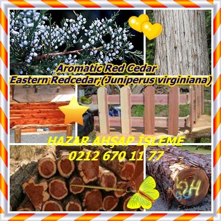 catsAromatic Red Cedar, Eastern Redcedar,(Juniperus virginiana)4