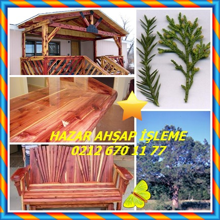catsAromatic Red Cedar, Eastern Redcedar,(Juniperus virginiana)8