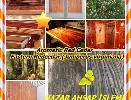 Aromatic Red Cedar, Eastern Redcedar,(Juniperus virginiana),Doğu Redcedar, Doğu kırmızı sedir, Doğu redcedar, Virginia ardıç