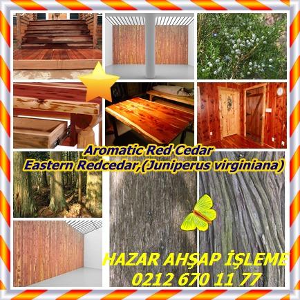 catsAromatic Red Cedar, Eastern Redcedar,(Juniperus virginiana)9