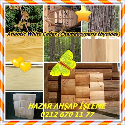 catsAtlantic White Cedar,(Chamaecyparis thyoides)12