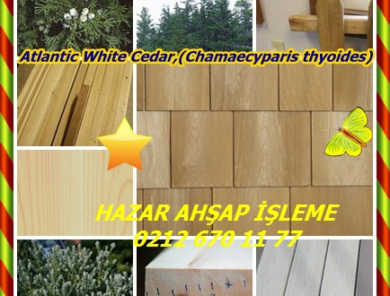 Atlantic White Cedar,Atlantic White Cedar,(Chamaecyparis thyoides),Güney Beyaz Sedir,Atlantik Beyaz Sedir, Güney Beyaz Sedir, Atlantik Beyaz Selvi, Beyaz Cypress