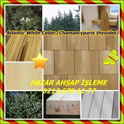 catsAtlantic White Cedar,(Chamaecyparis thyoides)32