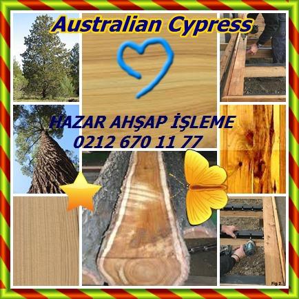 catsAustralian Cypressyy