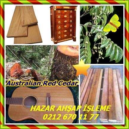 catsAustralian Red Cedar,Toona,(Toona ciliata)785