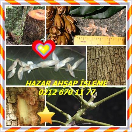 catsAustralian Red Cedar,Toona,(Toona ciliata)868