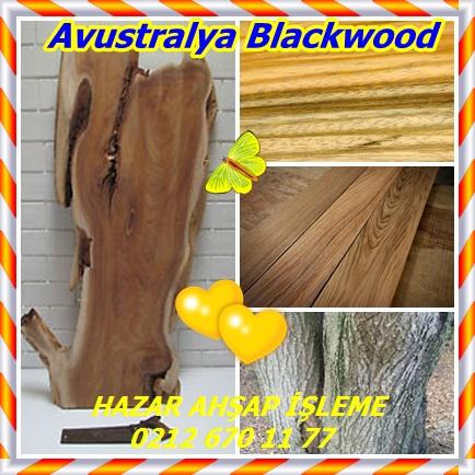 catsAvustralya Blackwood1