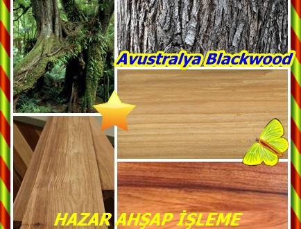Avustralya Blackwood,Tazmanya Blackwood,(Acacia melanoxylon),Akasya Blackwood,EBANO-da-Avustralya,  madeira-preta, maogani-da-Avustralya, Mogno-da-Australia, Schwarzholz Akazie, akasya nera Australiana, Australiese Swarthout