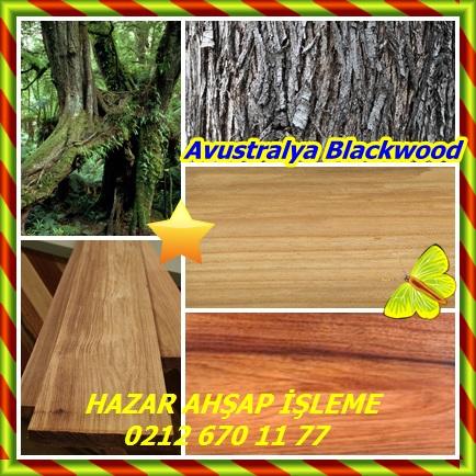 catsAvustralya Blackwood22