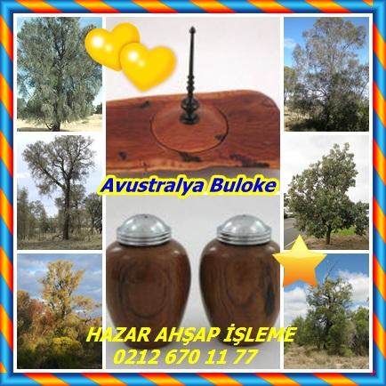 catsAvustralya Buloke ,(Allocasuarina luehmannii)22
