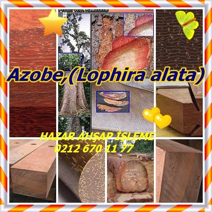 catsAzobe,(Lophira alata)