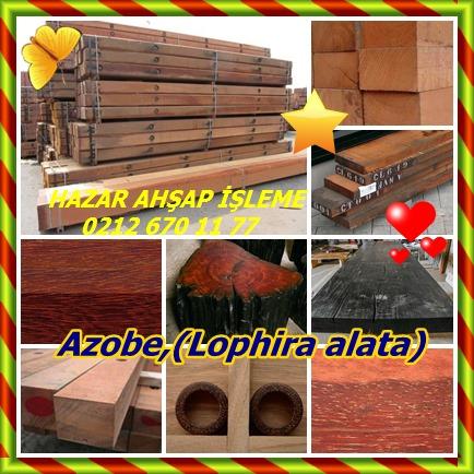 catsAzobe,(Lophira alata)77