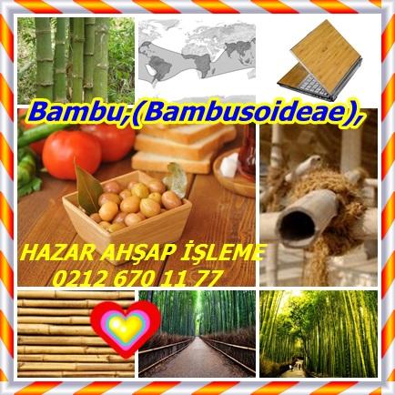 catsBambu,(Bambus432