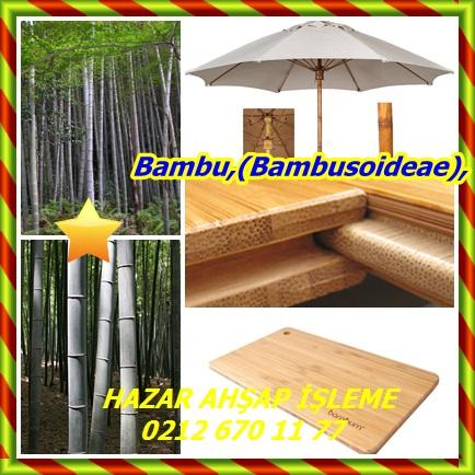catsBambu,(Bambusoideae),323