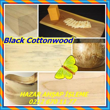 catsBlack Cottonwood, (Populus trichocarpa),Batı kavak3323