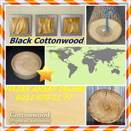 catsBlack Cottonwood, (Populus trichocarpa),Batı kavak42433