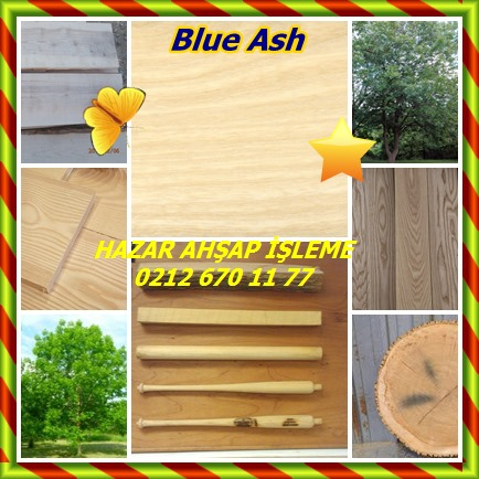 catsBlue Ash36