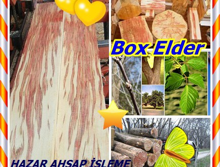 Box Elder,Dişbudak yapraklı Akçaağaç, (Acer negundo),Ash Maple, Kül-yaprak Maple, Siyah Ash, California Boxelder, Cutleaf Maple dahil, Cut-yapraklı Akçaağaç, negundo Maple, Kızılırmak Maple, kokuşmuş Ash, Şeker Ash, Üç yapraklı Akçaağaç, ve Batı Boxelder