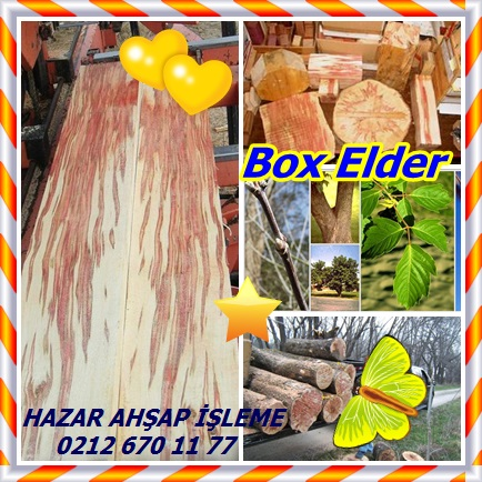catsBox Elder1
