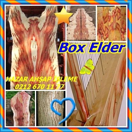 catsBox Elder221