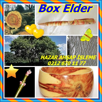 catsBox Elder23221
