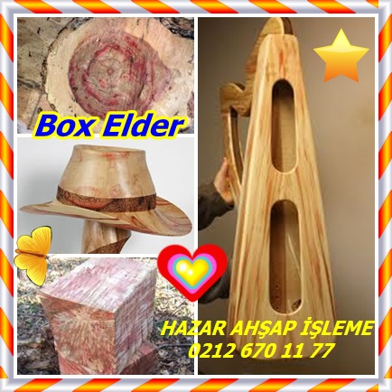 catsBox Elder5432