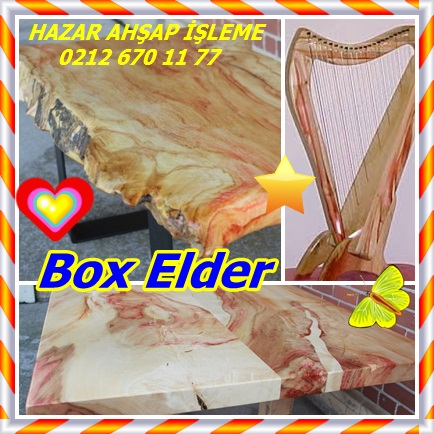 catsBox Elder5454