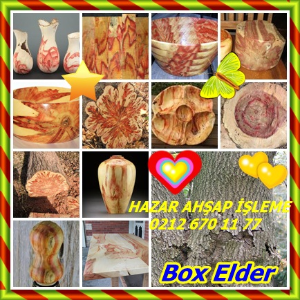 catsBox Elder565