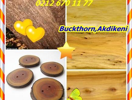 Buckthorn,Akdiken,Rhamnus spp.(Rhamnus cathartica), R purshiana,topalak tasfiye , ortak topalak