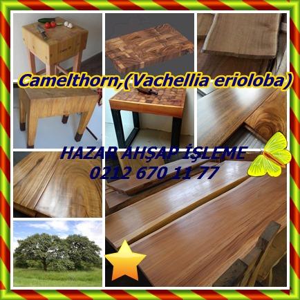 catsCamelthorn,(Vachellia erioloba)56