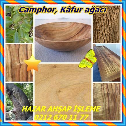 catsCamphor, Kâfur ağacı69