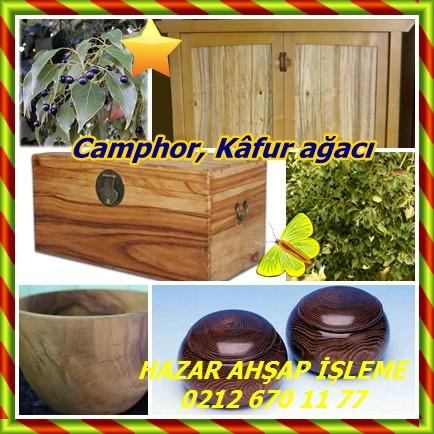 catsCamphor, Kâfur ağacı8